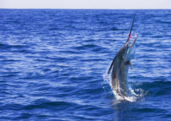 Deep sea fishing charters clearwater fl catch the for Clearwater beach deep sea fishing